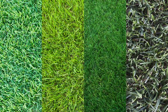 Tips for a healthier lawn american training american - Cesped natural ...
