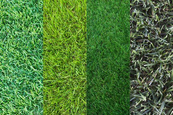 lawns-562x375
